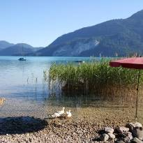 Sommer am Wolfgangsee_4